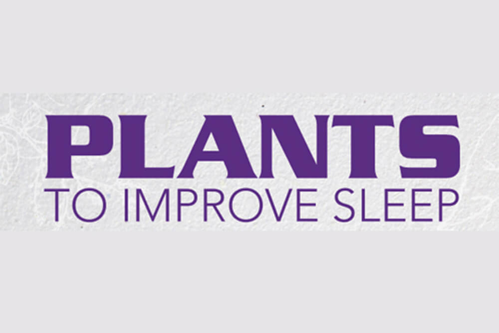 Plants to Improve Sleep